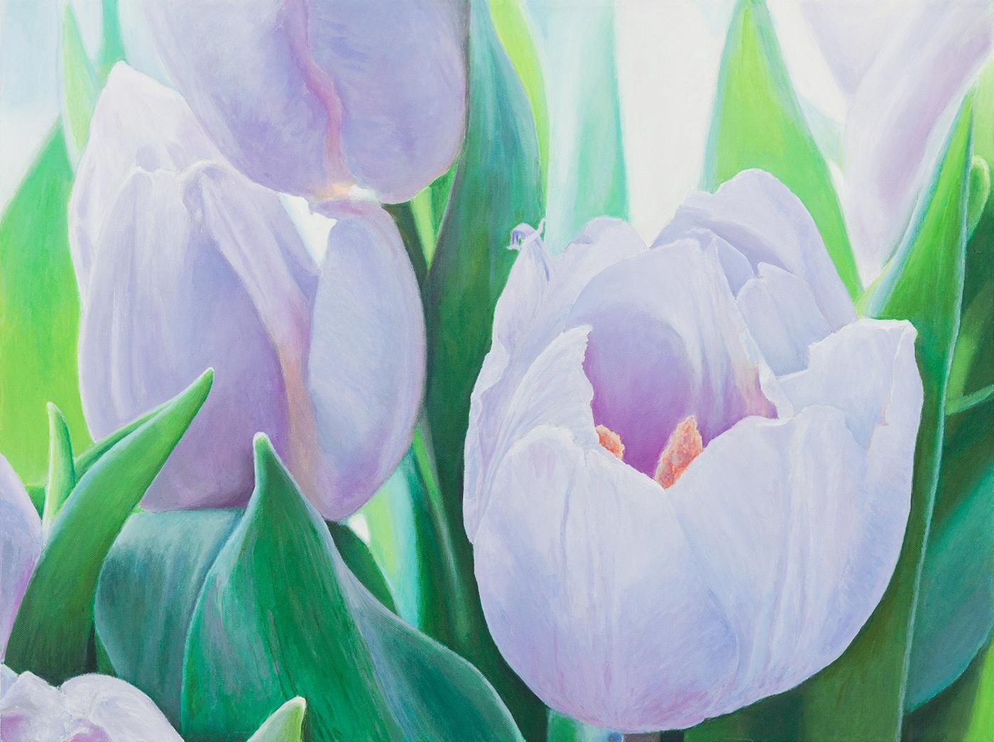 purple tulips | Maleri